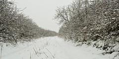 Snowy country road (marijanaivljanin993) Tags: snow road sneg put country selo markovina bush grm winter zima white belo camera nikon d3200 srbija serbia serbien laserbie staza path photo photography fotografija