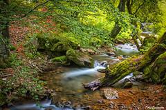 Bosque de Ciñera, Leon (ton21lakers) Tags: bosque ciñera leon spain canon tamron toño escandon sedas rio arboles naturaleza hojas