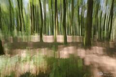 Abstraction forestière (Philippe Bélaz) Tags: abstractions abstraits arbres bougés effets forêts été