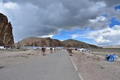 Scene along the Tashi Dor kora, Lake Namtso, Tibet (3) (Prof. Mortel) Tags: tibet lake namtso