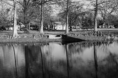 four (fallsroad) Tags: muskogeeoklahoma park city urban pond water tree trees reflection reflections bw blackandwhite monochrome shore shoreline cypress
