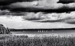 Summerscape 2018 # 32  ... (rebfoto ...) Tags: field grass sailing sky water lake river rebfoto monochrome boats sailingboats