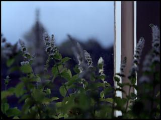 Summer evenings in the window
