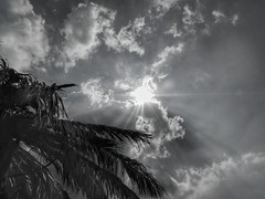 Greeksummer 2018 (panoskaralis) Tags: blackwhite blackandwhite sun sunlight rays sunrays sky skyclouds clouds umbrela beach lesvos lesvosisland mytilene greece greek hellas hellenic outdoor greekisland greeksummer nikoncoolpixb700 nikon nikonb700