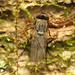 Woodpecker Fly
