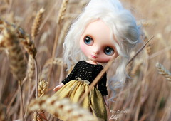 You ain't seen me... (pure_embers) Tags: pure embers middie blythe doll dolls portrait photography uk laura england girl pureembers iris white alpaca hair lily emberslily linea blissbien corn field