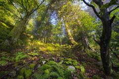 Pure Forest (Thomas Vanderheyden) Tags: forest foret nature paysage landscape tree arbre green vert ambiance uga grand angle fujifilm xt1 thomasvanderheyden colors couleur massifdesvosges vosge france