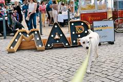 alternative market at Jardim do Morro, Vila Nova de Gaia (Gail at Large | Image Legacy) Tags: 2018 icethedog jardimdomorro porto portugal vilanovadegaia gailatlargecom