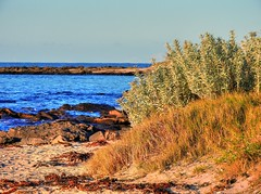 On the island XIII (elphweb) Tags: hdr highdynamicrange nsw australia seaside sea ocean water beach sand sandy brouleeisland island