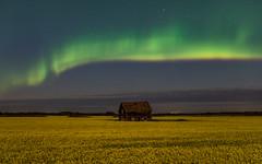 20180725-00-59-3.0 sec at f - 3.2-Aurora (WherezJeff) Tags: auroraborealis canola aurora northernlights alcomdale alberta canada ca d850 moonlight