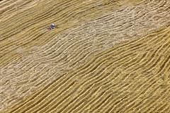 Bumpy Grain Harvest (Aerial Photography) Tags: by opf r 1ds34242 23072009 ackerbau bauernmalerei bavaria bayern deutschland diagonale ernte farbe feld fotoklausleidorfwwwleidorfde fotoklausleidorfwwwleidorfaerialcom germany getreidefeld goldgelb grafik landscapeandnature landschaft landschaftnatur landwirtschaft linien luftaufnahme luftbild mannsdorf p1 region reihen schierling stoppelfeld stroh traktor aerial agriculture color colour cornfield diagonal farmerspainting field graphicart graphics harvesting landscape landscapenature lines nature outdoor rows straw tractor schierlinglkrregensburg bayernbavaria deutschlandgermany deu