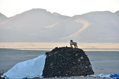 Dog on mound of dried yak dung, Lake Namtso, Tibet (Prof. Mortel) Tags: tibet lake namtso