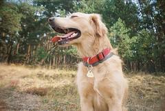 Popo in the woods (Zissou93) Tags: lomography la sardina analogue lomographycn400 nature dog portrait hot vacation holiday walk czech