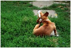 a scratching dog (Alex Chirila) Tags: canon eos m10 mm ef 50mm f18 stm dog
