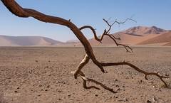 Erstarrt  I (LENS.ART Photographie) Tags: namibia namib naukluft wüste baum ast tree dry trocken dürre düne dune desert nikon d7200 landschaft landscape afrika africa sossusvlei
