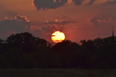 Orbital Fusion (Robin Shepperson) Tags: sun sunset summer evening light yellow orange dark trees sky clouds weather dusk d3400 nikon berlin germany fire glow fusion sunlight nature red pink