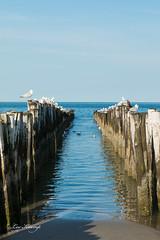 A rest on both sides even. (Leo Kramp) Tags: 2018 accessoires loweproflipside300awii noordzee flickr northsea burghhaamstede breakwater paalhoofd zeeland nederland nl