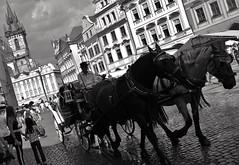... Prague notes ... 2018 _ FP5412M (attila.stefan) Tags: stefán stefan attila pentax k50 2018 prague prága praha horse street streetphoto summer nyár óvárosi tér