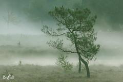 Quin, NP Maasduinen (The Netherlands) (Renate van den Boom) Tags: 09september 2018 boom europa jaar landschap limburg maand maasduinen natuur nederland quin renatevandenboom ven water