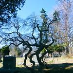 Sleepy Hollow Cemetery thumbnail