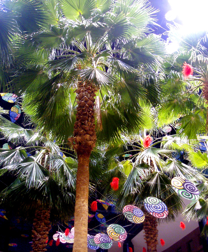 Winter Garden palms