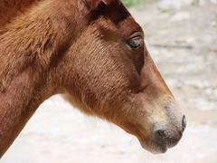 potro (ruurmo) Tags: horse face animal closeup wow germany caballo interesting venezuela great 2006 ruurmo caracas pferd magnificent babel potro 1on1 mamífero potrillo frizztext fsantastic