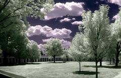The Lawn - by zachstern