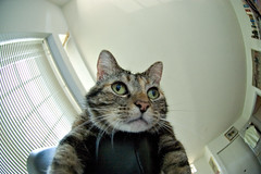 Emily hangs out (debunix) Tags: cat emily fisheye