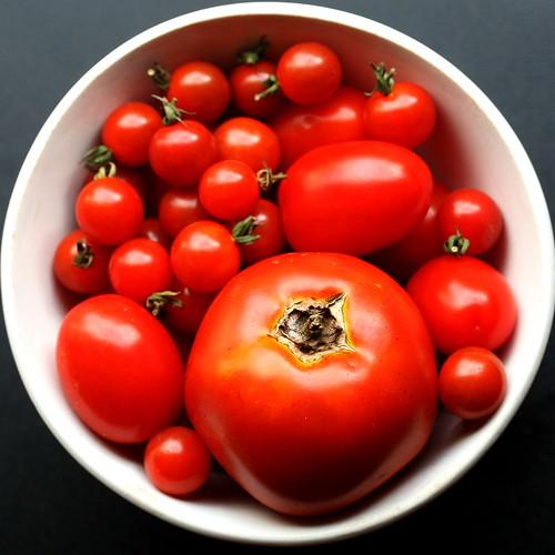tomatoes squaredcircle