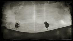 Paint Can Pinhole: Montibeller Park (Matt Callow) Tags: park tree michigan annarbor hc110 pinhole paintbrush paintcan homemadecamera pittsfieldtownship expiredpaper montibellerpark