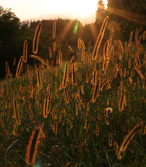 Backlit Meadow (fenlandsnapper) Tags: italy grass 510fav wow fantastic meadow 123 321 backlit montello sigma1850mmexdg