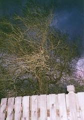 Spooky Backyard Tree 2