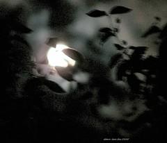 Moon for romance ....   DSCF1984a