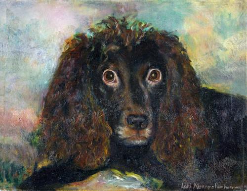 Winchester, portrait of Boykin Spaniel