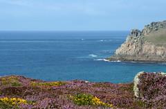 My Cornwall (Sara Richer) Tags: sea summer england tag3 taggedout coast cornwall tag2 tag1 heather gorse stlevantosennencove