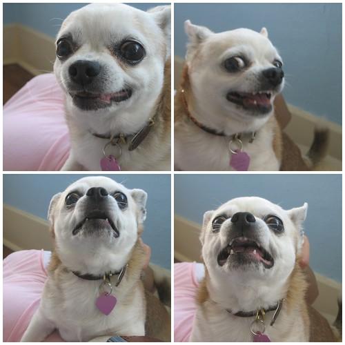 Faces of Peso