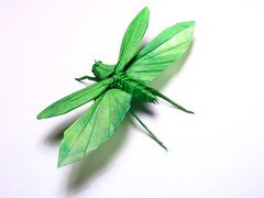 Flying katydid origami (Chosetec) Tags: green art paper flying origami grasshopper onwhite katydid origamichallenge origamichallenge1
