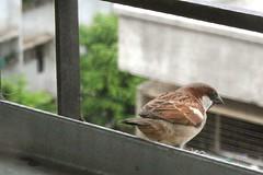M I N D (Dharmesh Thakker) Tags: india bird eye 350d thought free mind mumbai