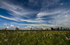buenos_aires_fields (paulr1970) Tags: city nature skyline clouds reeds puerto buenosaires reserve madero pampas