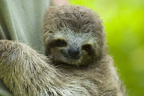 Sloth Smiling And smiling sloth