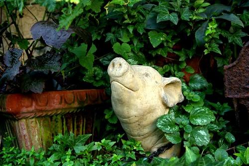 Do Pigs Dream of Electric Sheep?