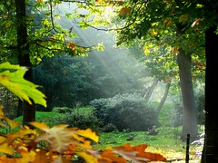 Morning has broken... (Mieke Vos Photographics) Tags: topf25 dutch topv111 bravo explore apeldoorn neterlands 35faves gtaggroup goddaym1 1on1photooftheday impressedbeauty favoritegarden fiveflickrfavs