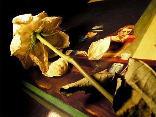Hopper's Nighthalks, Photo B.Salaj