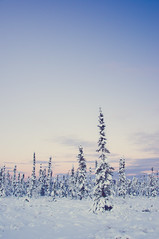 Winter blues (Michelle Myhill) Tags: winter alaska snow trees sky nature outdoor