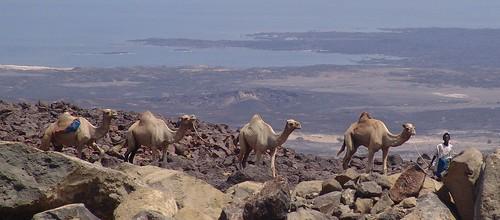 Salt caravan, Lac Assal, Djibouti