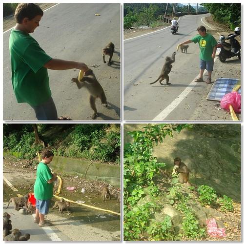 Sam feeds the monkeys