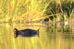 Botswana 2018 - Delta de l'Okavango (philippebeenne) Tags: afrique africa afriqueaustrale botswana okavango delta fleuve rivière eau water sauvage wild marais nature waterscape paysages reflets avion brousse