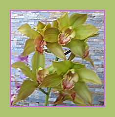 Orchids In Chartreuse (bigbrowneyez) Tags: orchids gorgeous macro fabulous fresh delightful flowers frame cornice lovely elegant pretty green chartreuse stonewall wall brick fancy nature natura belli bellissimi delicate flickrgreen restaurant bamboo soft painterly mothersday celebration