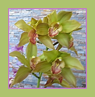 Orchids In Chartreuse