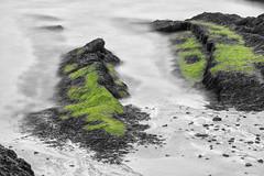 Mossy Beach (Role Bigler) Tags: canoneos5dmkii ef100400lisusm ireland irishcoast irland küste natur nature beach coast gitzo mossy